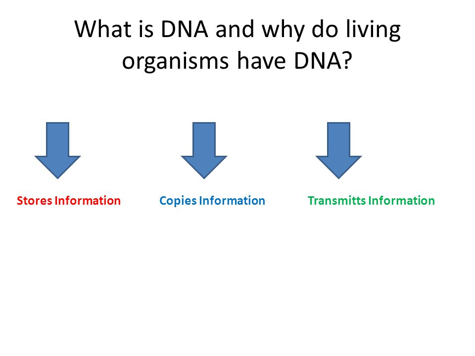 What is DNA and why do living organisms have DNA? Stores InformationCopies Information Transmitts Information