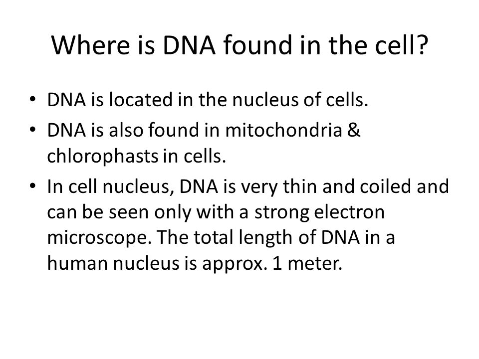 Where is DNA found in the cell. DNA is located in the nucleus of cells.