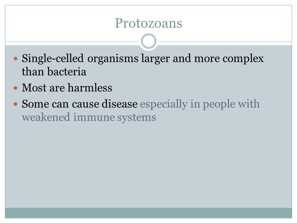 Protozoans Single-celled organisms larger and more complex than bacteria Most are harmless Some can cause disease especially in people with weakened i