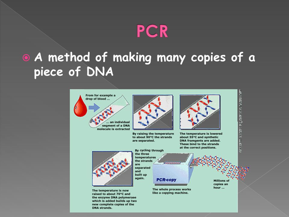  A method of making many copies of a piece of DNA