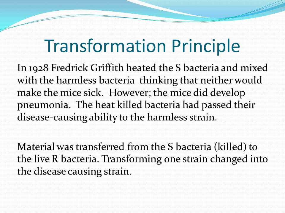 Transformation Principle In 1928 Fredrick Griffith heated the S bacteria and mixed with the harmless bacteria thinking that neither would make the mice sick.