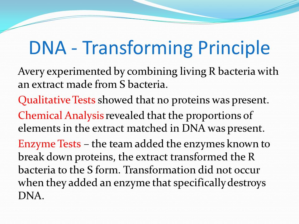 DNA - Transforming Principle Avery experimented by combining living R bacteria with an extract made from S bacteria.