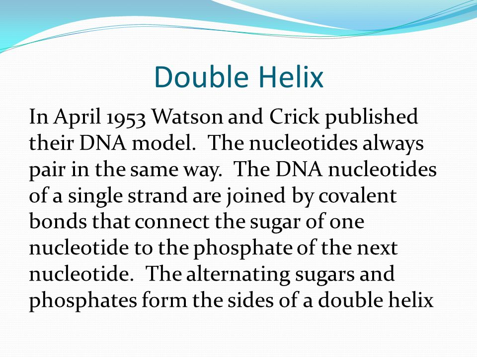 Double Helix In April 1953 Watson and Crick published their DNA model.