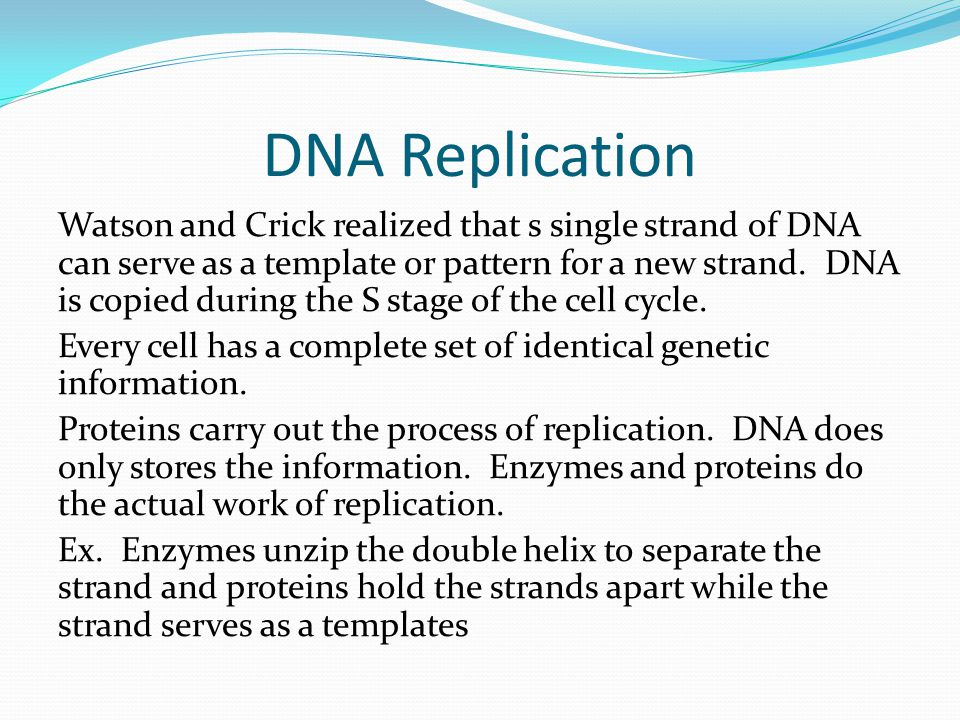 DNA Replication Watson and Crick realized that s single strand of DNA can serve as a template or pattern for a new strand.