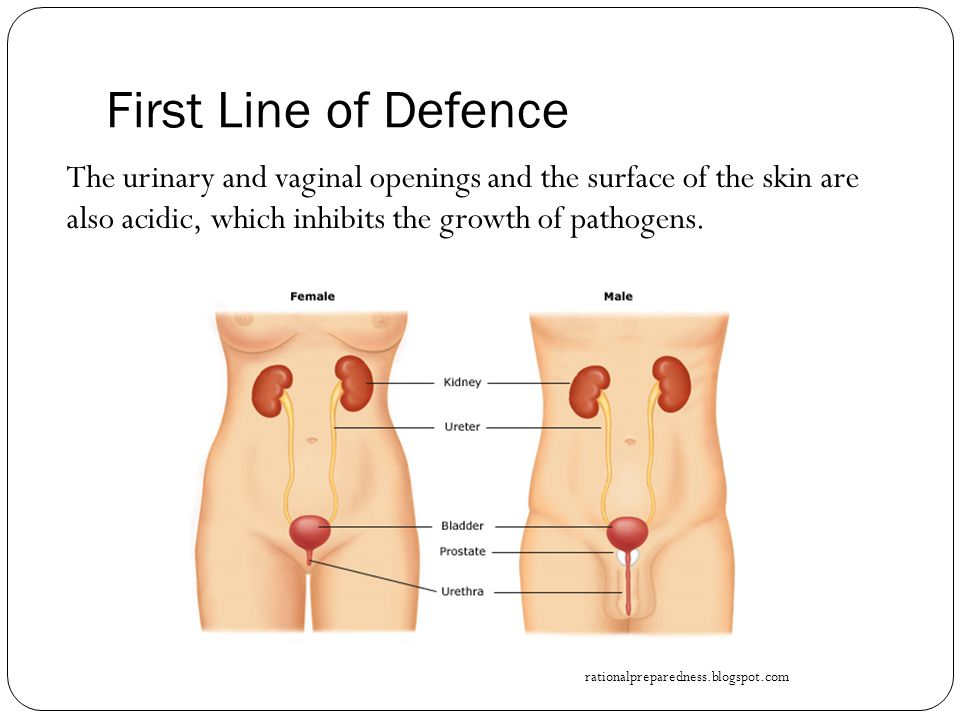 First Line of Defence The urinary and vaginal openings and the surface of the skin are also acidic, which inhibits the growth of pathogens.