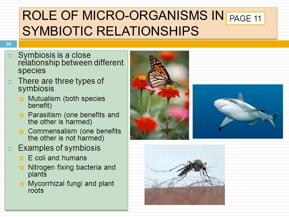 ROLE OF MICRO-ORGANISMS IN SYMBIOTIC RELATIONSHIPS 10 PAGE 11