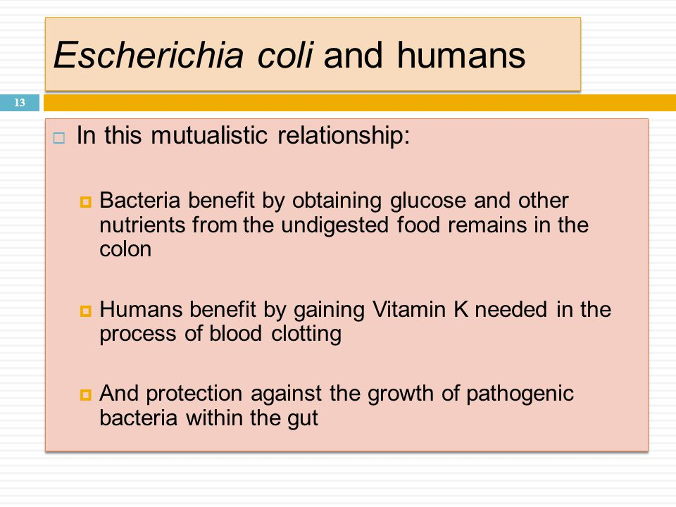Escherichia coli and humans 13  In this mutualistic relationship:  Bacteria benefit by obtaining glucose and other nutrients from the undigested food remains in the colon  Humans benefit by gaining Vitamin K needed in the process of blood clotting  And protection against the growth of pathogenic bacteria within the gut  In this mutualistic relationship:  Bacteria benefit by obtaining glucose and other nutrients from the undigested food remains in the colon  Humans benefit by gaining Vitamin K needed in the process of blood clotting  And protection against the growth of pathogenic bacteria within the gut