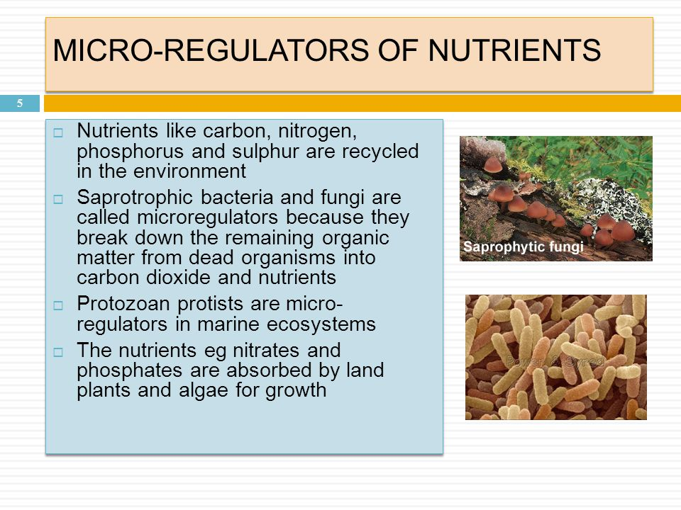 MICRO-REGULATORS OF NUTRIENTS 5  Nutrients like carbon, nitrogen, phosphorus and sulphur are recycled in the environment  Saprotrophic bacteria and fungi are called microregulators because they break down the remaining organic matter from dead organisms into carbon dioxide and nutrients  Protozoan protists are micro- regulators in marine ecosystems  The nutrients eg nitrates and phosphates are absorbed by land plants and algae for growth  Nutrients like carbon, nitrogen, phosphorus and sulphur are recycled in the environment  Saprotrophic bacteria and fungi are called microregulators because they break down the remaining organic matter from dead organisms into carbon dioxide and nutrients  Protozoan protists are micro- regulators in marine ecosystems  The nutrients eg nitrates and phosphates are absorbed by land plants and algae for growth