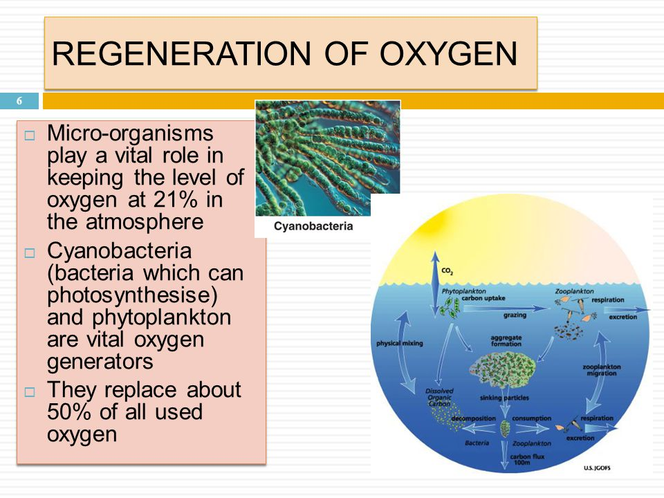 REGENERATION OF OXYGEN 6  Micro-organisms play a vital role in keeping the level of oxygen at 21% in the atmosphere  Cyanobacteria (bacteria which can photosynthesise) and phytoplankton are vital oxygen generators  They replace about 50% of all used oxygen  Micro-organisms play a vital role in keeping the level of oxygen at 21% in the atmosphere  Cyanobacteria (bacteria which can photosynthesise) and phytoplankton are vital oxygen generators  They replace about 50% of all used oxygen