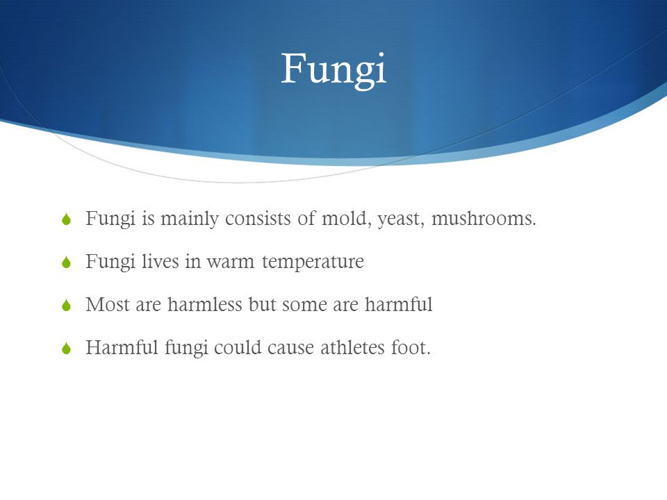 Fungi  Fungi is mainly consists of mold, yeast, mushrooms.