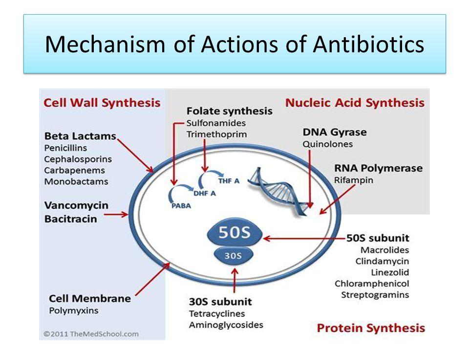 Mechanism of Actions of Antibiotics