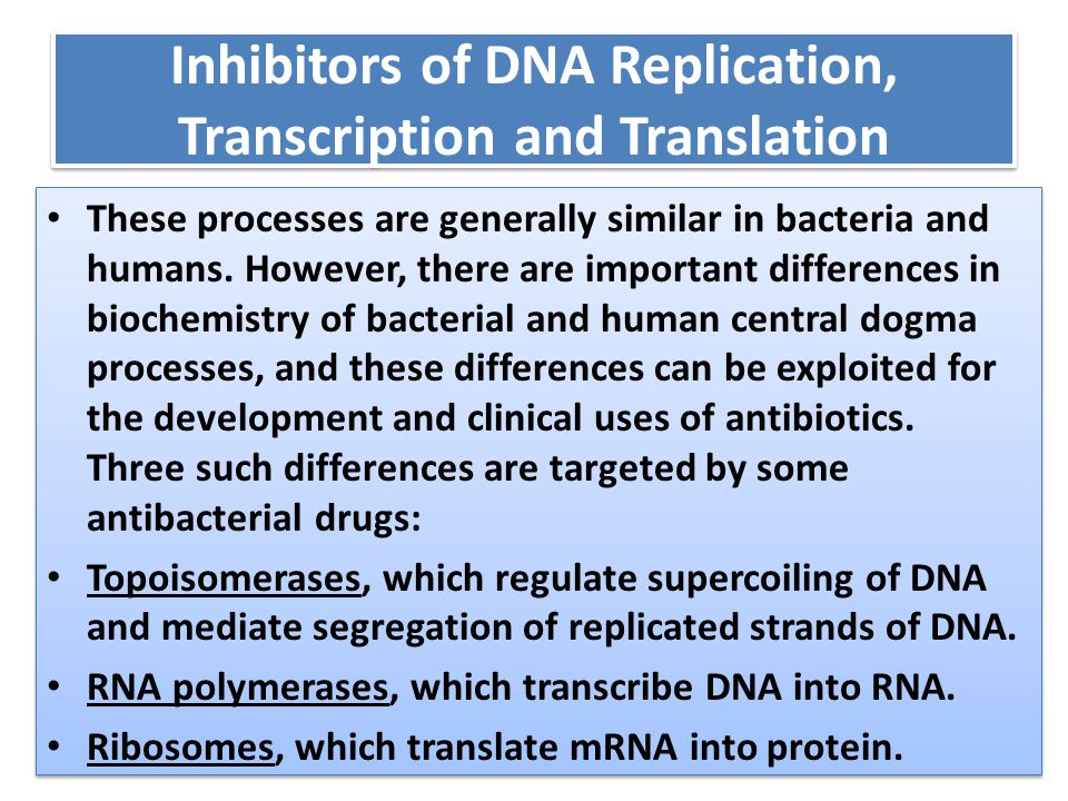 Inhibitors of DNA Replication, Transcription and Translation These processes are generally similar in bacteria and humans. However, there are importan