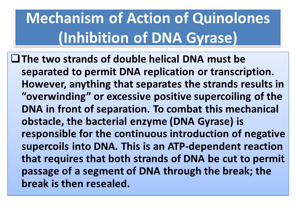 Mechanism of Action of Quinolones (Inhibition of DNA Gyrase)  The two strands of double helical DNA must be separated to permit DNA replication or tr