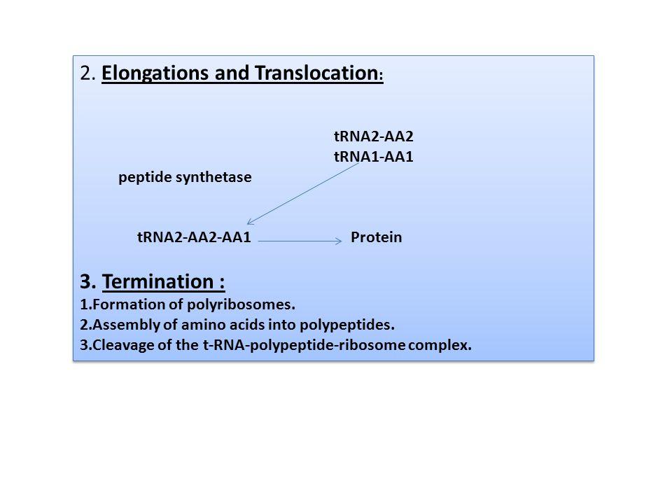 2. Elongations and Translocation : tRNA2-AA2 tRNA1-AA1 peptide synthetase tRNA2-AA2-AA1 Protein 3. Termination : 1.Formation of polyribosomes. 2.Assem
