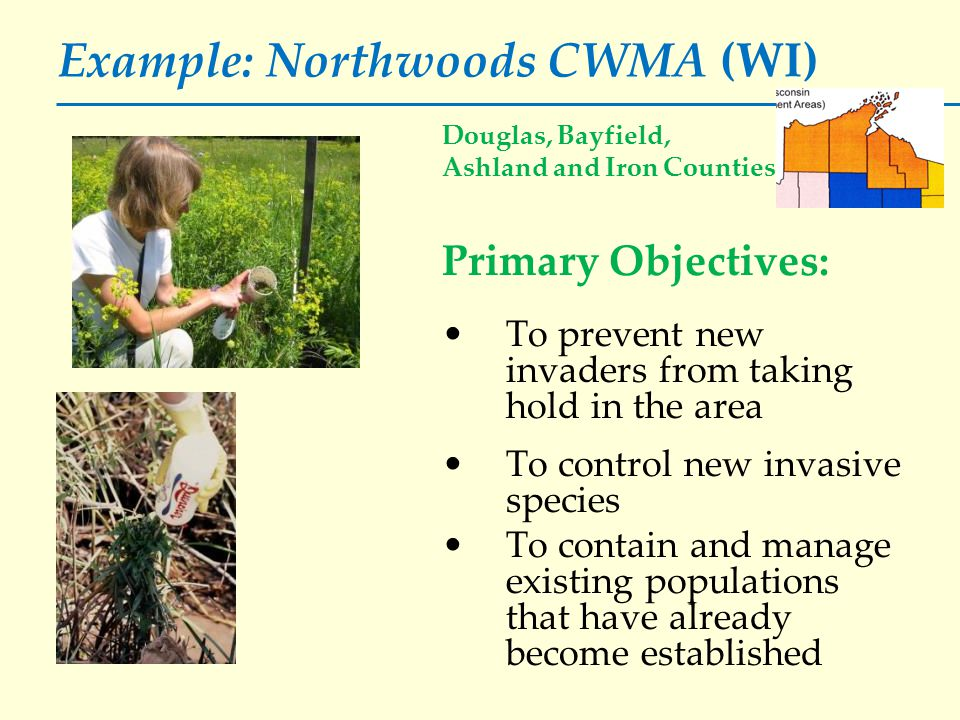 Example: Northwoods CWMA (WI) Douglas, Bayfield, Ashland and Iron Counties Primary Objectives: To prevent new invaders from taking hold in the area To