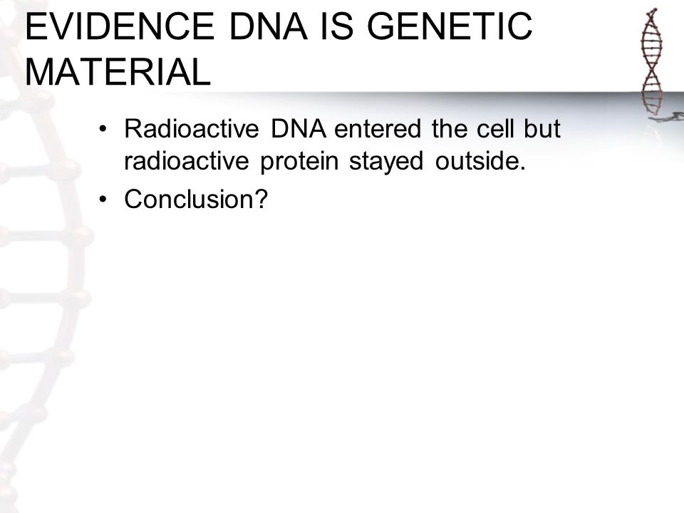EVIDENCE DNA IS GENETIC MATERIAL Radioactive DNA entered the cell but radioactive protein stayed outside.