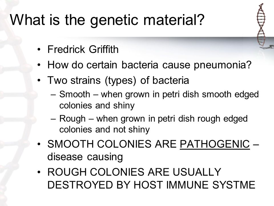 What is the genetic material? Fredrick Griffith How do certain bacteria cause pneumonia? Two strains (types) of bacteria –Smooth – when grown in petri