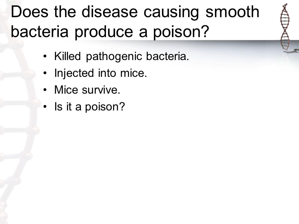 Does the disease causing smooth bacteria produce a poison? Killed pathogenic bacteria. Injected into mice. Mice survive. Is it a poison?