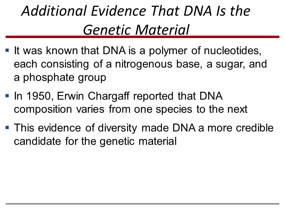Additional Evidence That DNA Is the Genetic Material  It was known that DNA is a polymer of nucleotides, each consisting of a nitrogenous base, a sug