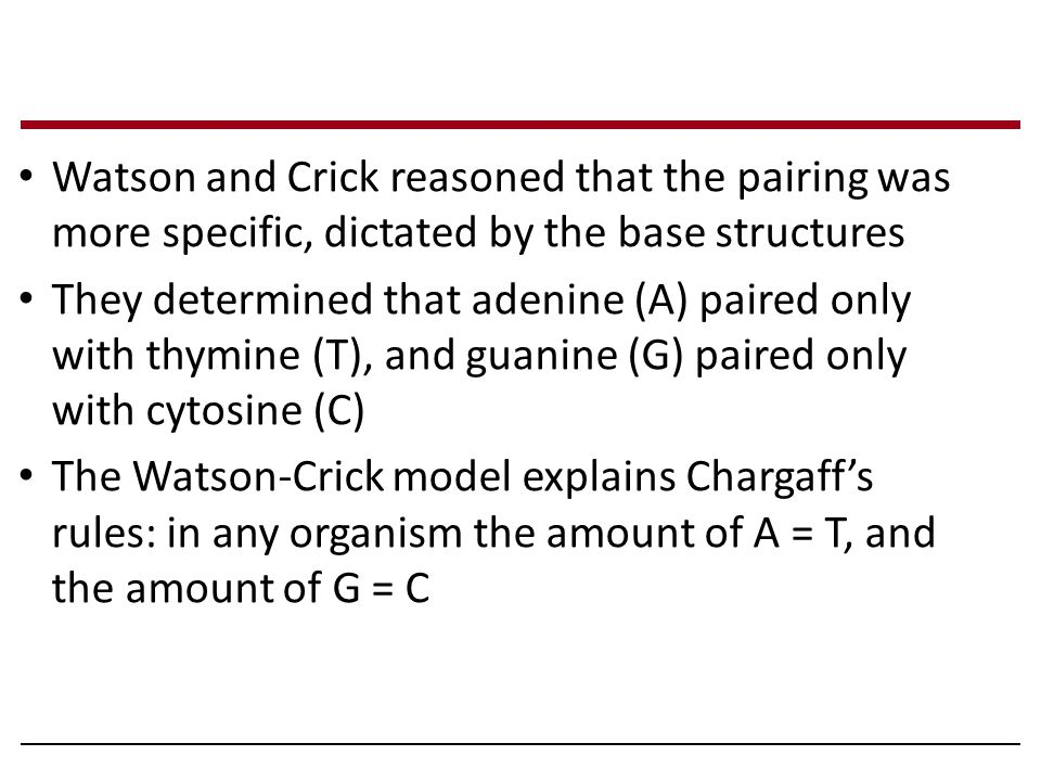 Watson and Crick reasoned that the pairing was more specific, dictated by the base structures They determined that adenine (A) paired only with thymin