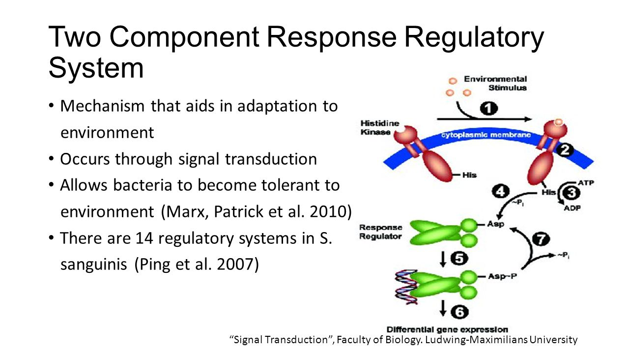 Which genes are actually significant There are 14 regulatory genes – which one is expressed under certain conditions.