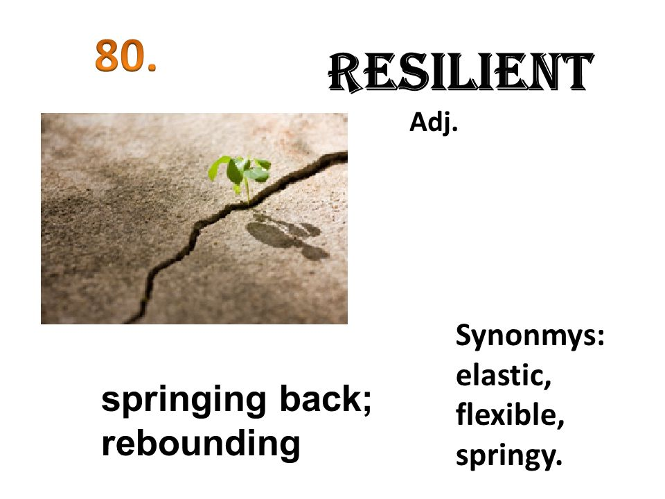 Resilient Adj. springing back; rebounding Synonmys: elastic, flexible, springy.