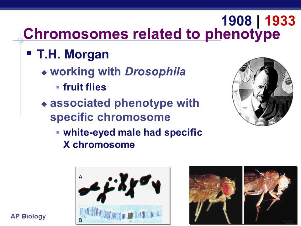 AP Biology Hershey & Chase Alfred HersheyMartha Chase 1952   1969 Hershey