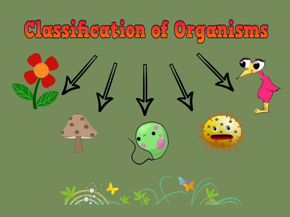 Why do we classify organisms.
