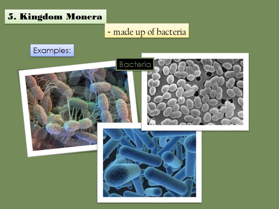 5. Kingdom Monera - made up of bacteria Examples: Bacteria