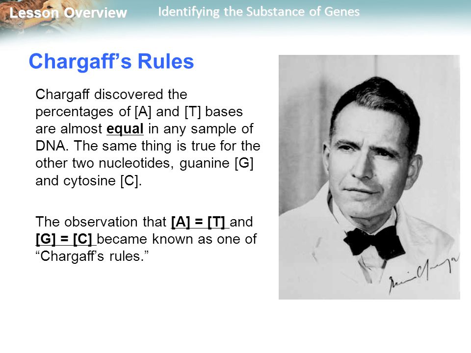 Lesson Overview Lesson Overview Identifying the Substance of Genes Chargaff's Rules Chargaff discovered the percentages of [A] and [T] bases are almos