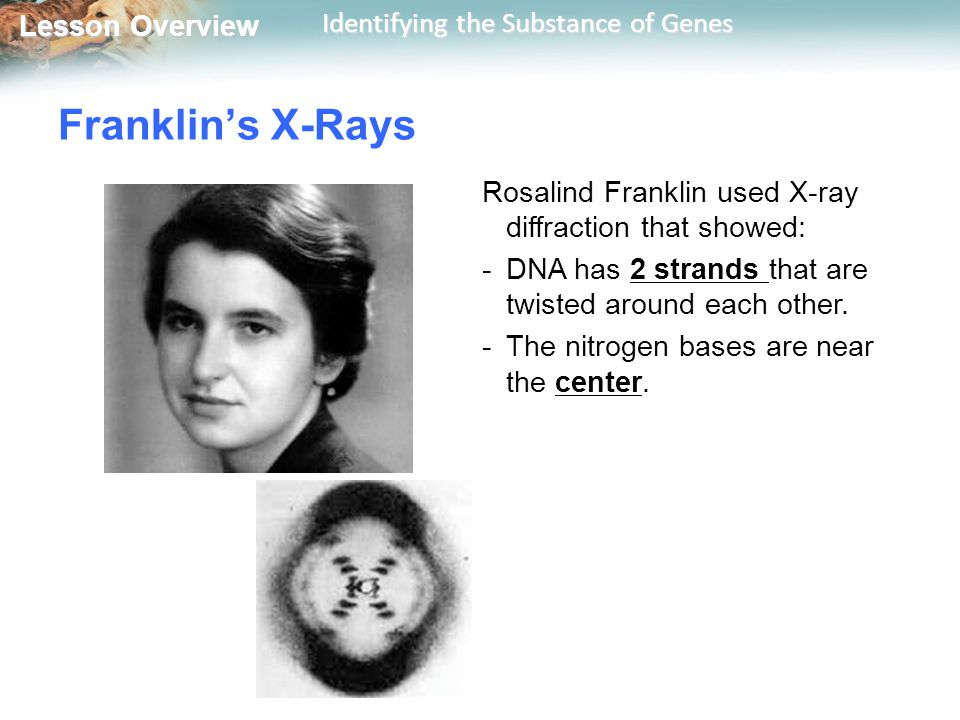 Lesson Overview Lesson Overview Identifying the Substance of Genes Franklin's X-Rays Rosalind Franklin used X-ray diffraction that showed: -DNA has 2