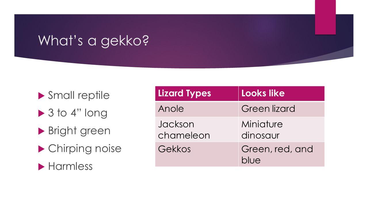 What's a gekko.
