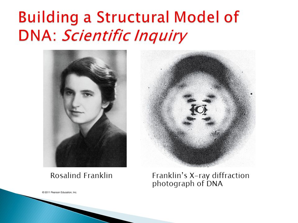 Rosalind FranklinFranklin's X-ray diffraction photograph of DNA