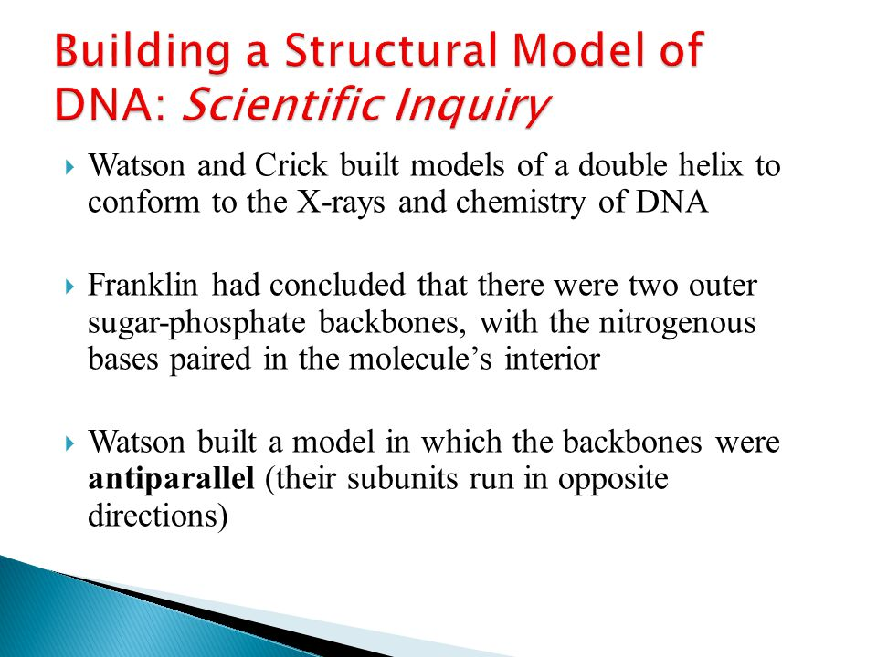  Watson and Crick built models of a double helix to conform to the X-rays and chemistry of DNA  Franklin had concluded that there were two outer sugar-phosphate backbones, with the nitrogenous bases paired in the molecule's interior  Watson built a model in which the backbones were antiparallel (their subunits run in opposite directions)