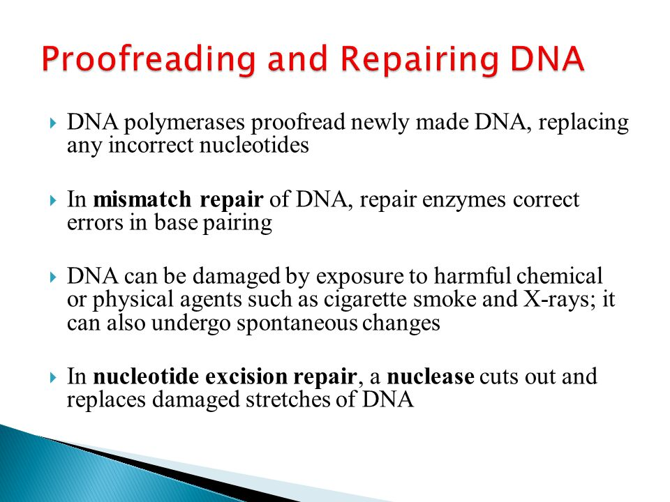  DNA polymerases proofread newly made DNA, replacing any incorrect nucleotides  In mismatch repair of DNA, repair enzymes correct errors in base pairing  DNA can be damaged by exposure to harmful chemical or physical agents such as cigarette smoke and X-rays; it can also undergo spontaneous changes  In nucleotide excision repair, a nuclease cuts out and replaces damaged stretches of DNA
