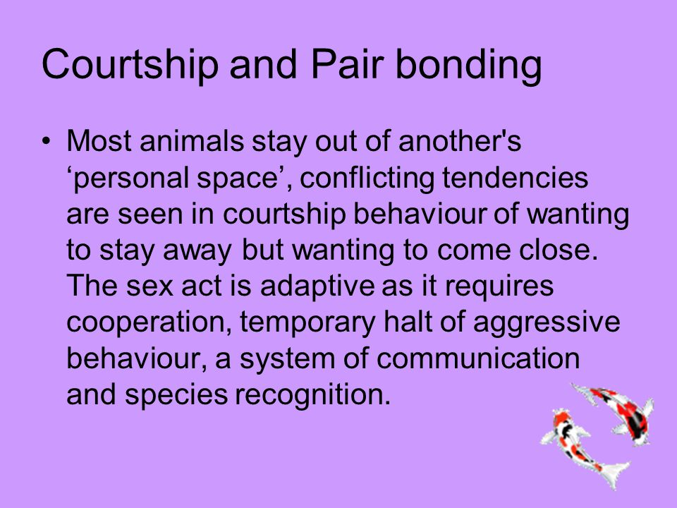 Courtship and Pair bonding Most animals stay out of another s 'personal space', conflicting tendencies are seen in courtship behaviour of wanting to stay away but wanting to come close.