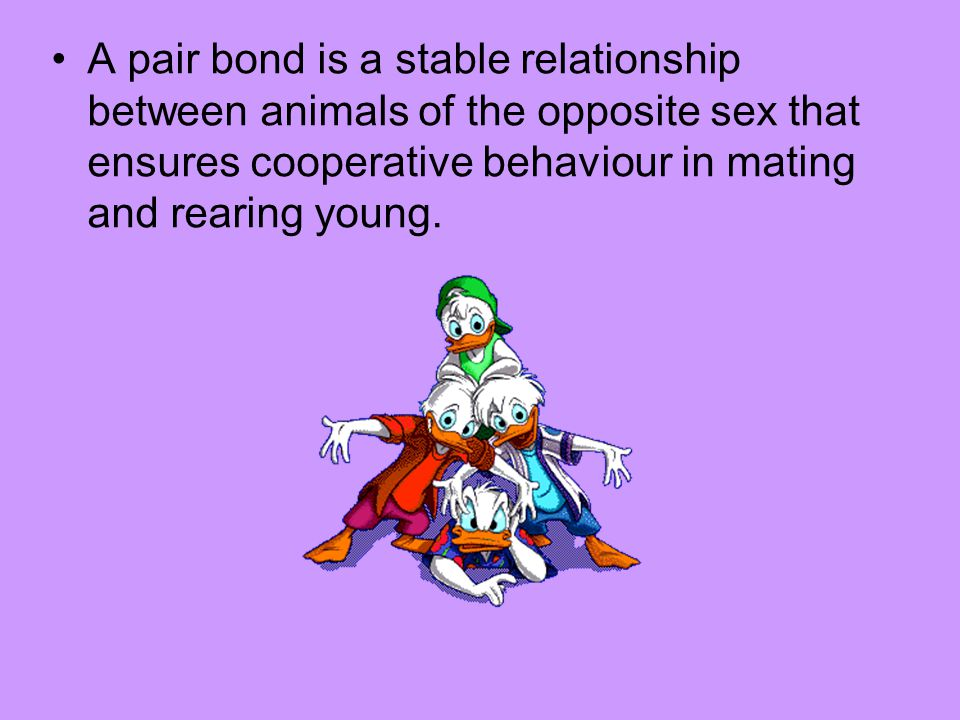 A pair bond is a stable relationship between animals of the opposite sex that ensures cooperative behaviour in mating and rearing young.