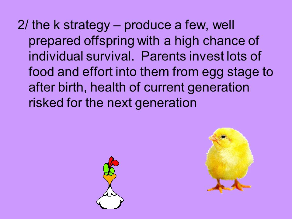 2/ the k strategy – produce a few, well prepared offspring with a high chance of individual survival.