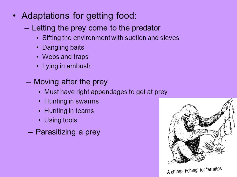 Adaptations for getting food: –Letting the prey come to the predator Sifting the environment with suction and sieves Dangling baits Webs and traps Lying in ambush –Moving after the prey Must have right appendages to get at prey Hunting in swarms Hunting in teams Using tools –Parasitizing a prey