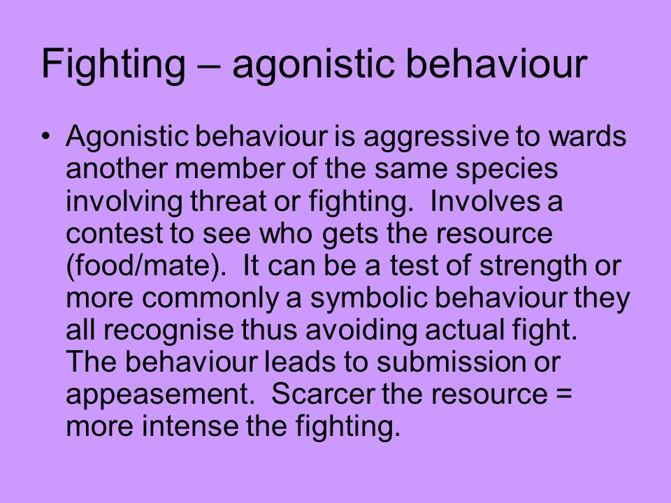 Fighting – agonistic behaviour Agonistic behaviour is aggressive to wards another member of the same species involving threat or fighting.