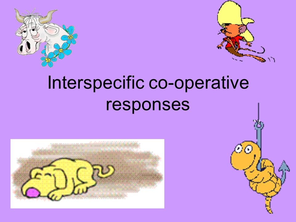 Interspecific co-operative responses