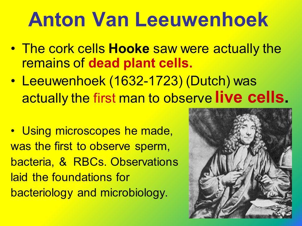 Anton Van Leeuwenhoek The cork cells Hooke saw were actually the remains of dead plant cells. Leeuwenhoek (1632-1723) (Dutch) was actually the first m