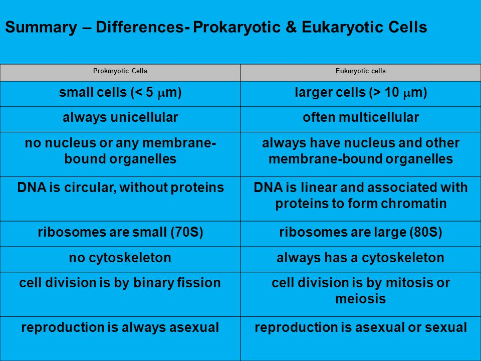 Summary – Differences- Prokaryotic & Eukaryotic Cells Prokaryotic CellsEukaryotic cells small cells (< 5  m)larger cells (> 10  m) always unicellula