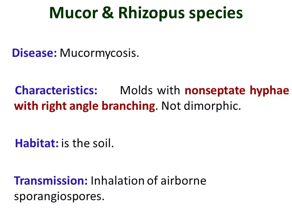 Mucor & Rhizopus species Disease: Mucormycosis. Characteristics:Molds with nonseptate hyphae with right angle branching. Not dimorphic. Habitat: is th