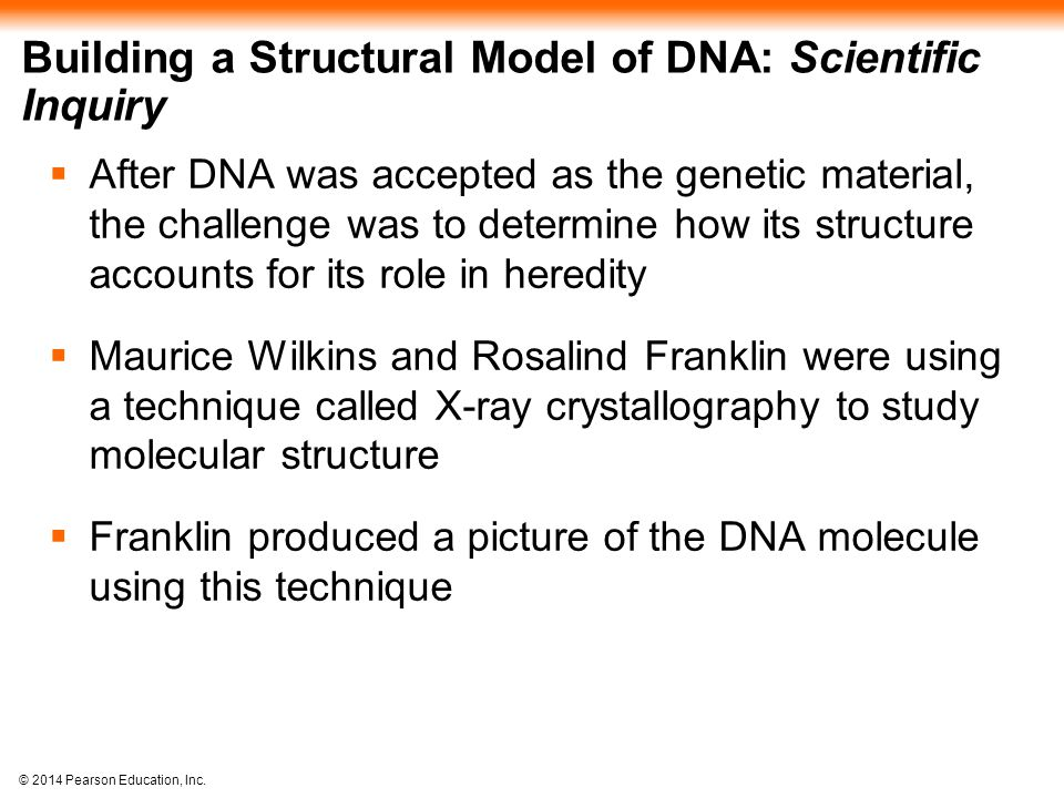 © 2014 Pearson Education, Inc. Building a Structural Model of DNA: Scientific Inquiry  After DNA was accepted as the genetic material, the challenge