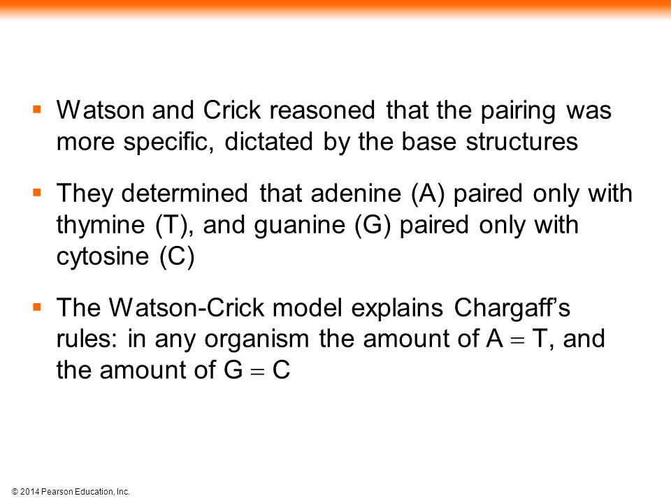 © 2014 Pearson Education, Inc.  Watson and Crick reasoned that the pairing was more specific, dictated by the base structures  They determined that