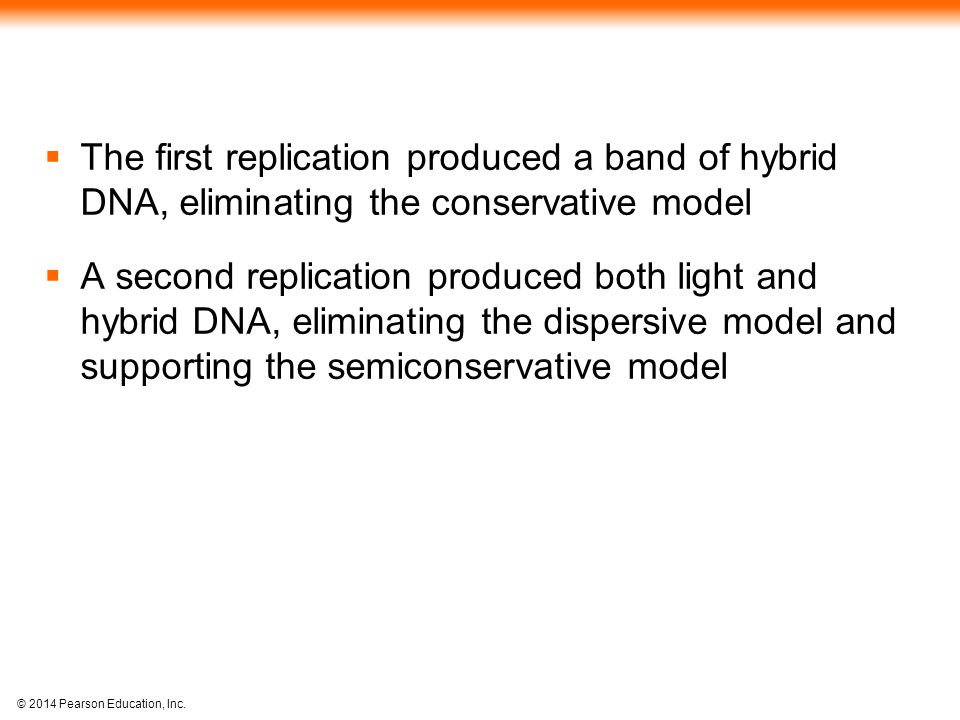 © 2014 Pearson Education, Inc.  The first replication produced a band of hybrid DNA, eliminating the conservative model  A second replication produc