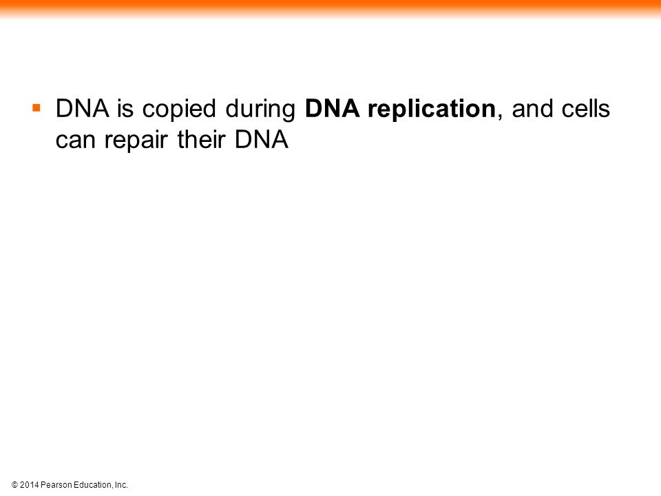 © 2014 Pearson Education, Inc.  DNA is copied during DNA replication, and cells can repair their DNA