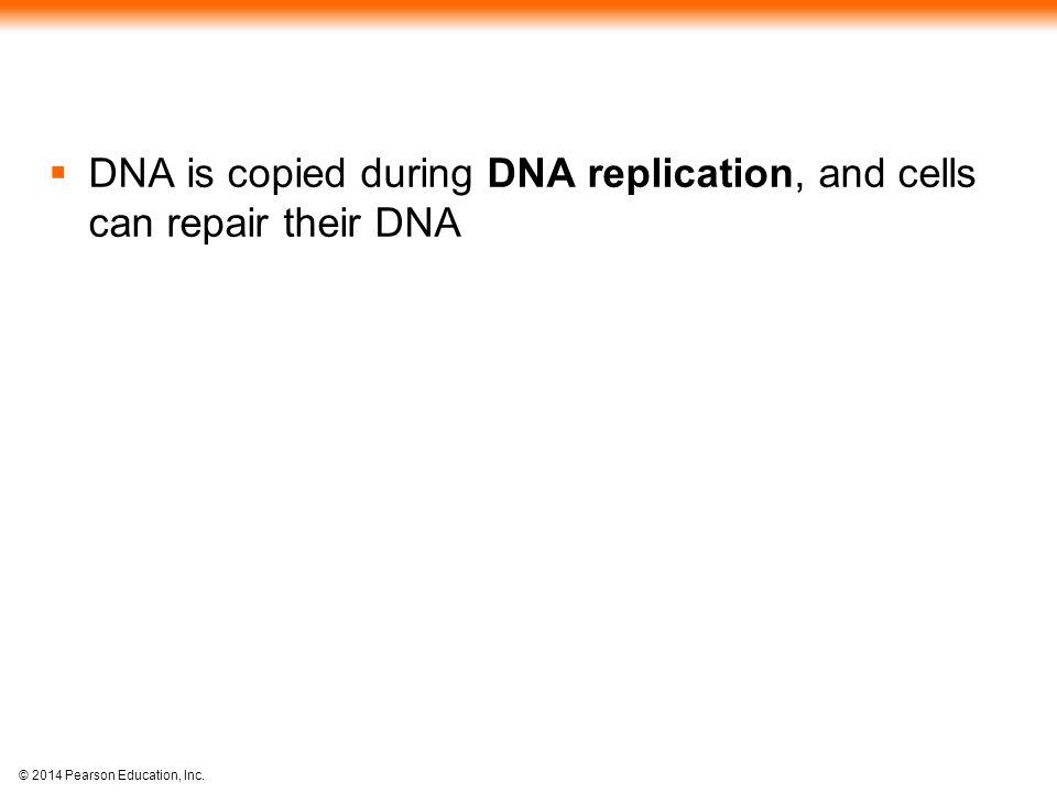 © 2014 Pearson Education, Inc.DNA pol III makes Okazaki fragment 2.