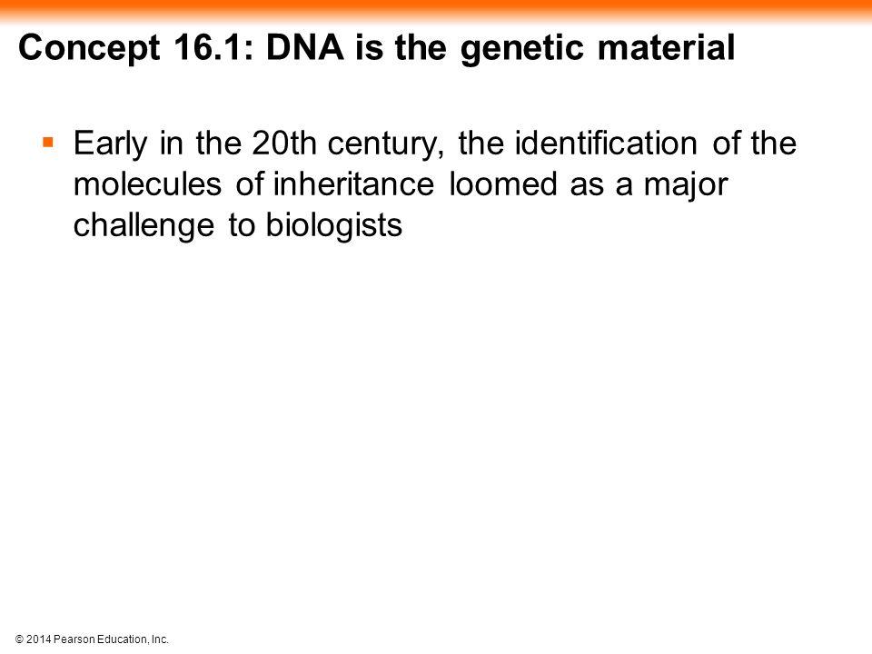 © 2014 Pearson Education, Inc.Figure 16.16c-2 DNA pol III makes Okazaki fragment 2.